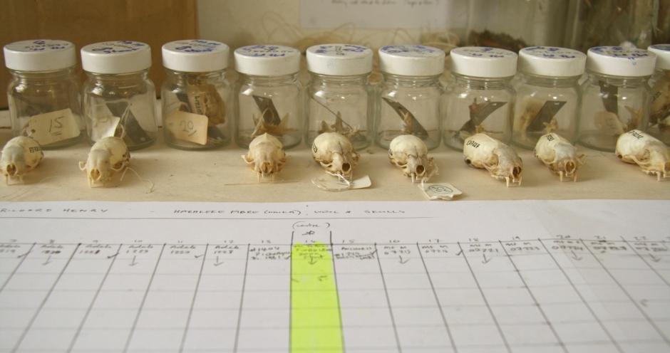 34 Skull specimens